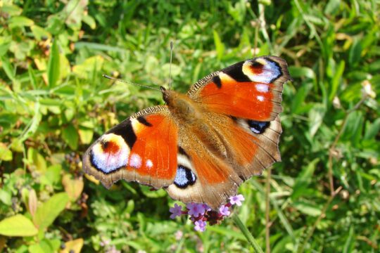 Vlinders voor de voedselbossen in De Park